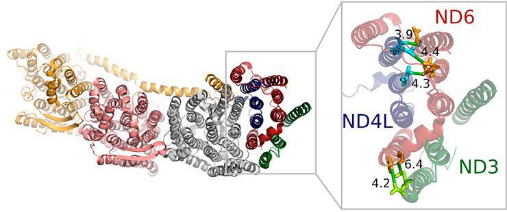Imagen de la enzima oxidoreductasa