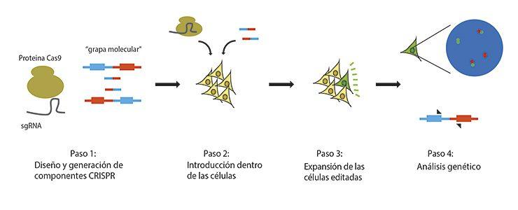 CRISPR para generar modelos celulares de cáncer