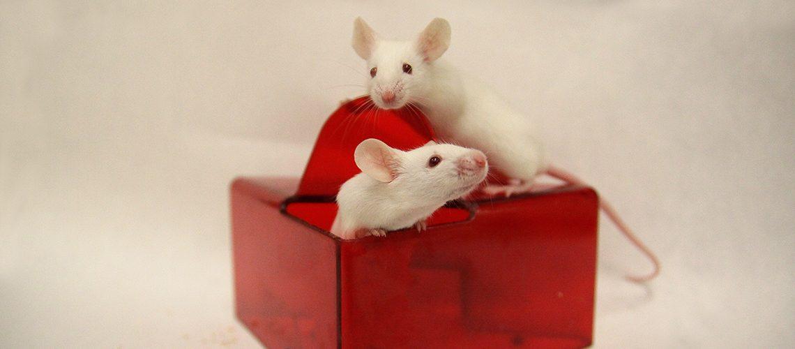 Investigación con animales