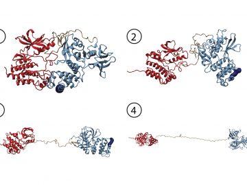 La proteína FAK activa la migración celular