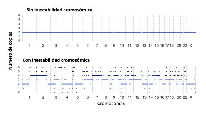 Inestabilidad cromosómica