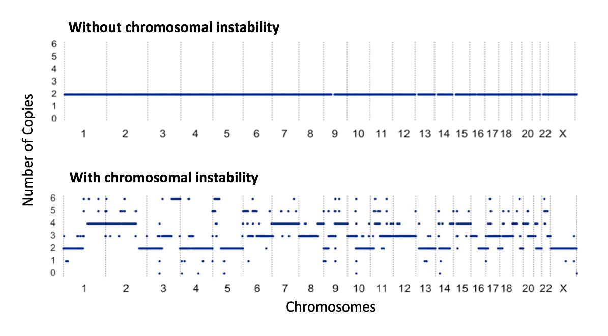 Chromosomal instability